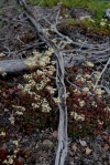 Lichen and Deadwood